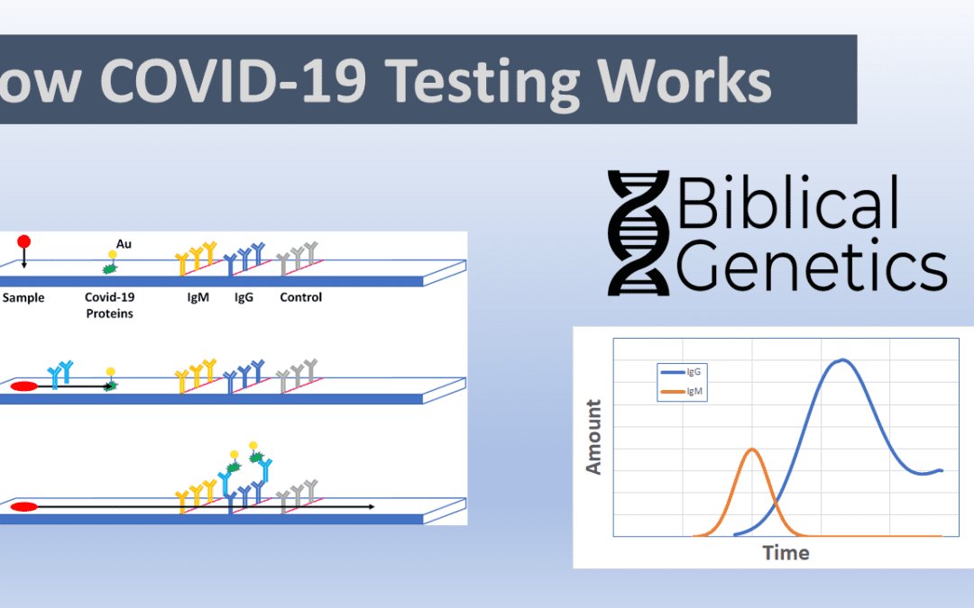How COVID-19 Testing Works