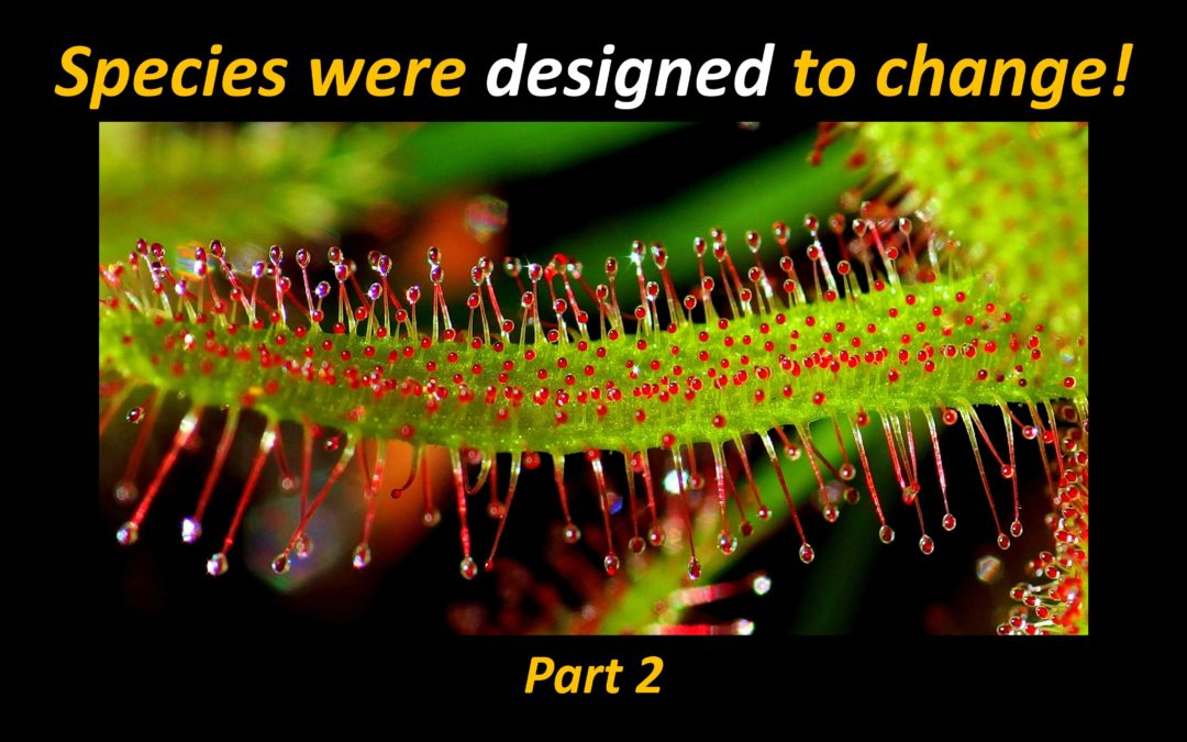 Speciation and the Limits of Change